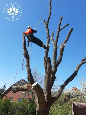 Baum fällen Lüneburg